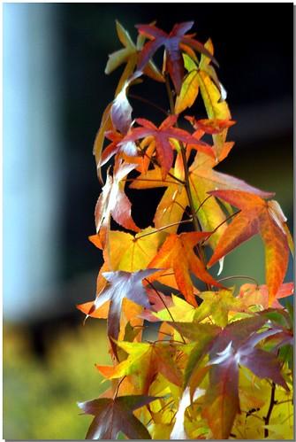 Autumn - 2008 [2]