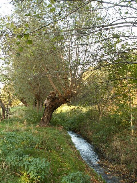 Ein altes Weiblein an der Weide im Kaitzbach fragt um deine Not und all deinen Kummer, die Welt ist groß mache dich auf den Weg in die weite Welt um dein Glück zu suchen, aber was willst du anfangen, wenn die Sonne untergeht, gehe an den großen Birnbaum, der dort am Kreuzweg steht 031