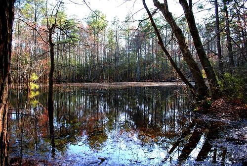 trees tree nature pine forest bay pond woods pines delaware saltwater fishandwildlife wildlifearea naturalresources assawomanbay naturalresource statewildlifearea sussexcountyde inlandbay assawomanbaystatewildlifearea denrec