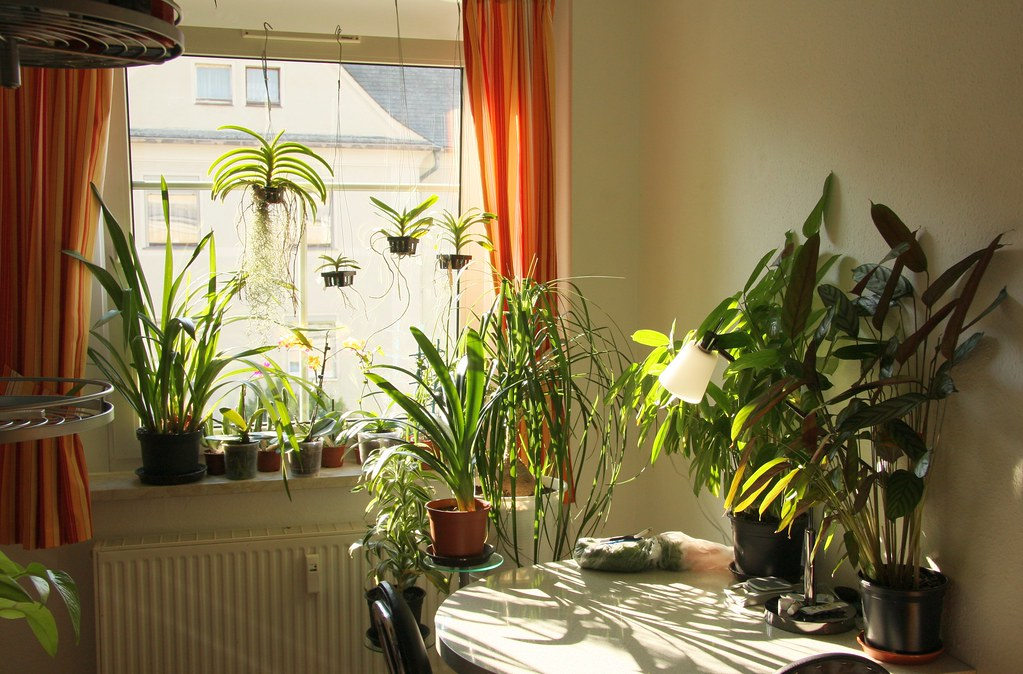 Küche Pflanzen