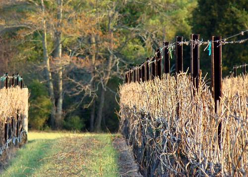 vineyard spring magichour yadkincounty ruralnc flinthillvineyard
