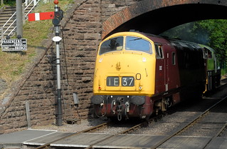 """Warship Class D832 """"Onslaught"""", West Somerset Railway   by Forest Pines"""
