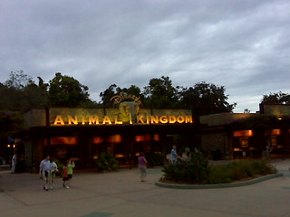 Last look back at Disney's Animal Kingdom | by Erin *~*~*