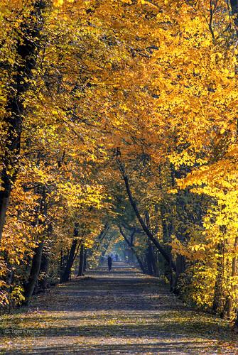 autumn toronto ontario fall trail hdr indiansummer photomatix northtoronto landscapesseascapes kaygardnerbeltlinepark tomfredaphotography