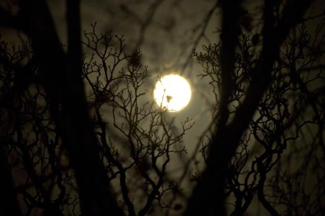Moon Tree Shadows