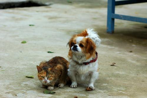 cat & dog   by West Zest