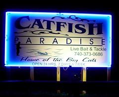 Catfish Paradise | by Mike Tewkesbury