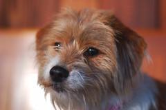 Meet Pippa | by helloyarn