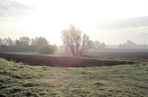 mist tree green field sunrise haze frost