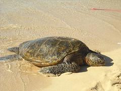 Turtle Beach | by jdnx