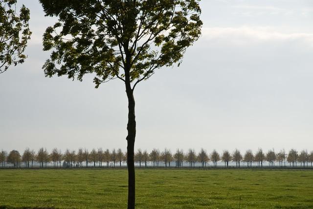 Laan van Nittersum/Lawn of Nittersum