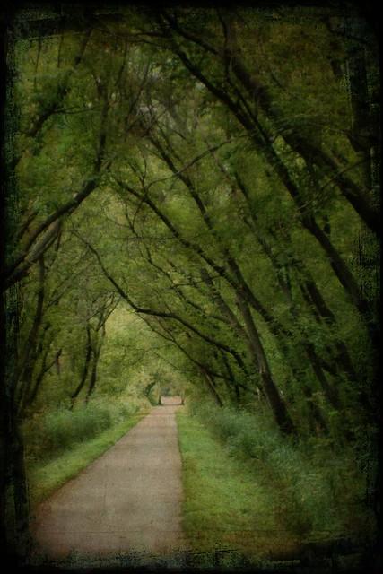 Lindenwood Trail