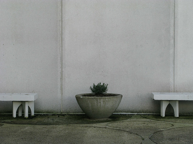 Two Benches and a Sad Plant