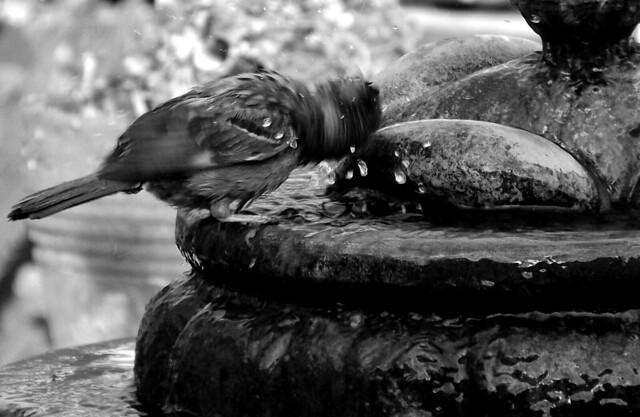 Día de baño  (digital)  (IMGP2646a)
