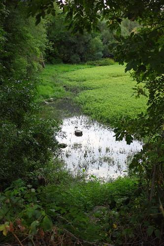 park green nature water oregon canon landscape salem om slough zuiko minto mintobrownislandpark gzuiko28mmf35 t1i