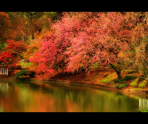 pink lake reflection tree green water landscape spring pond blossoms northcarolina raleigh bloom pullenpark chrysti platinumphoto megashot