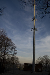 Cell Phone Tower on Horse Nettle | by @HandstandSam
