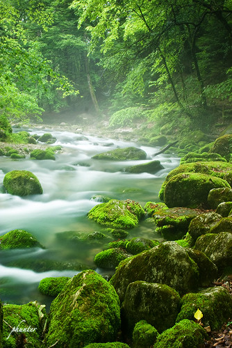 Green stream and fallen leave IMG_6518_small.jpg | by phunter 好人