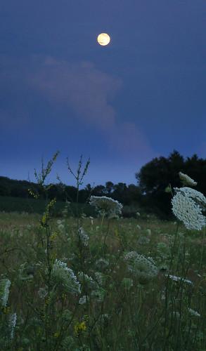 flowers wild moon night landscape twilight dusk meadow luna moonrise lunar s700 aplusphoto ysplix
