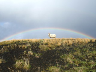 Rainbow Goat - Iceland | by Chalky Lives