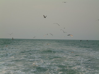 Seagull during Malacca Straits Cruising