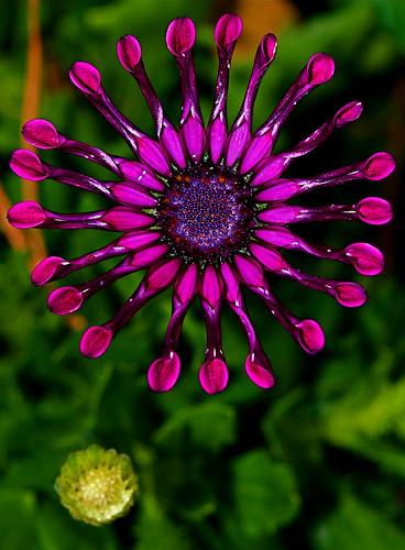 naturesfinest ultimateshot diamondclassphotographer excellentsflowers natureselegantshots flowersarefabulous