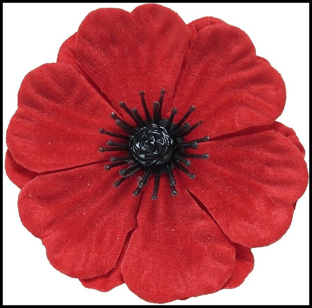 lest we forget | Please Wear a Poppy