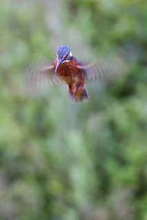 2011 06 22_Kingfisher | by Jonnersace