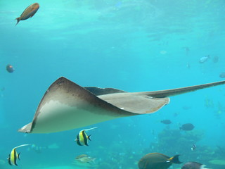 Sea World Sting Ray | by Flying Cloud