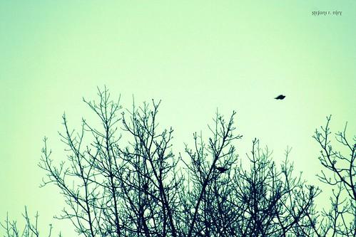 trees sky green birds ominous hitchcock 75300mm