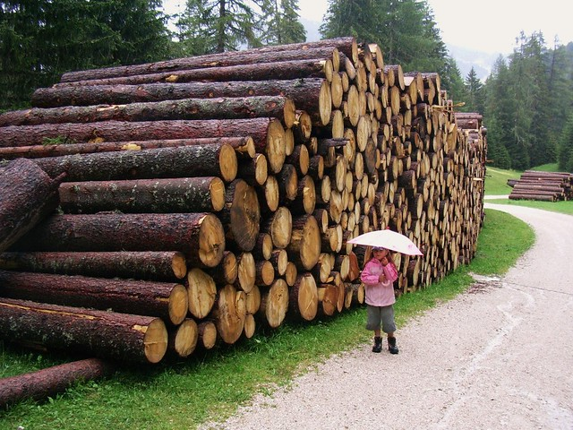 Dem Holz passt der Regen - uns weniger