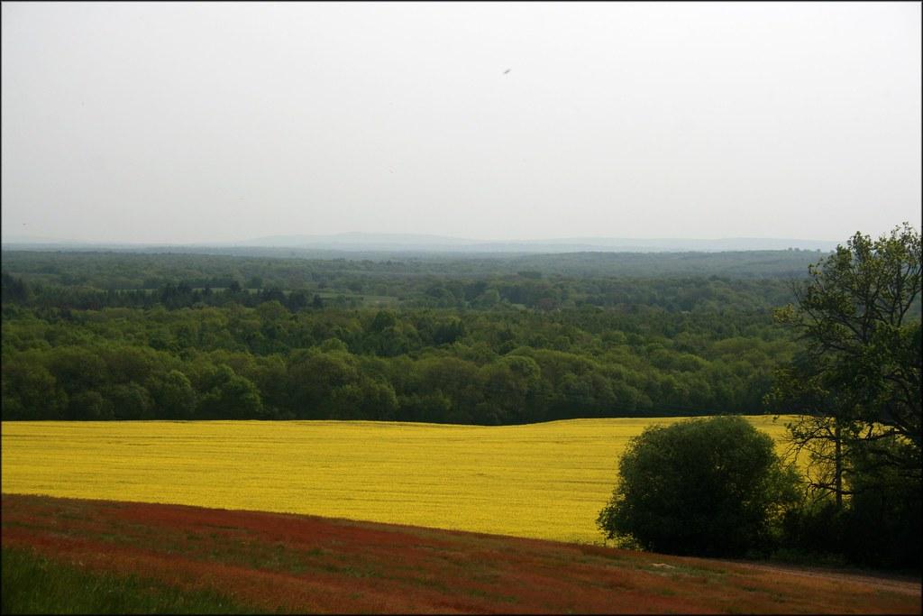 View near Hambledon