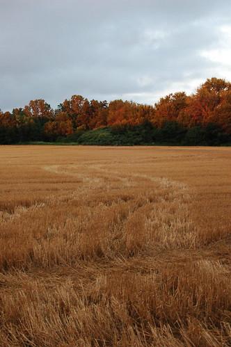 ontario canada field geotagged hillsboro stubble geo:lat=43115332 geo:lon=82083149