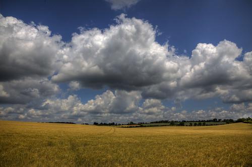 sky clouds cornfield