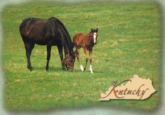 Kentucky Horses Map Postcard