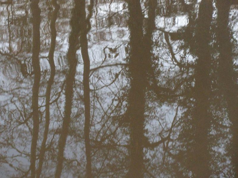 Reflected trees Guildford Circular