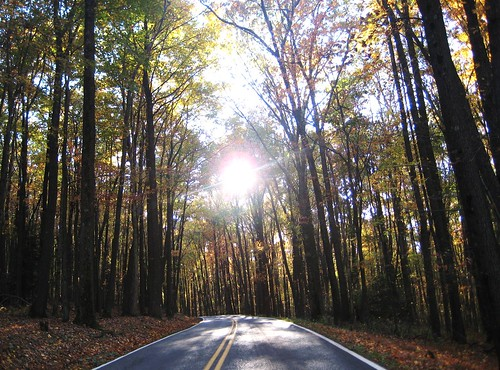 statepark road trees sun nature sunshine forest outdoors woods wv westvirginia coopersrock