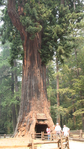 7/9 - Chandelier Tree | by satsumabug