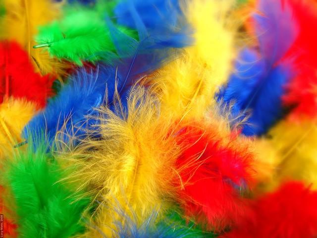 Plumas de colores - México 2008 2529