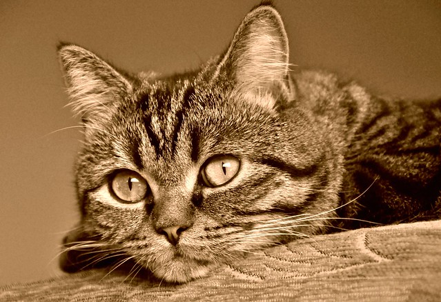Even In Sepia, Her Eyes Are Amazing!