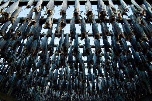 Dead fish hanging | by afloden