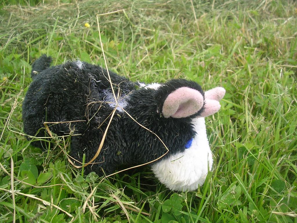 Abandoned livestock Berwick to Eastbourne