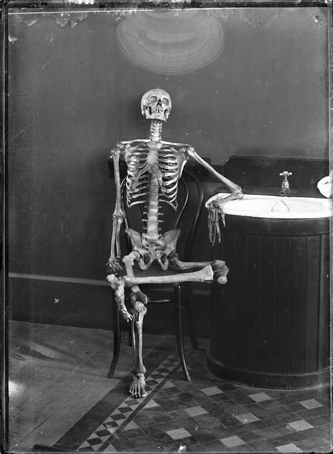 Portrait of an articulated skeleton on a bentwood chair | Flickr