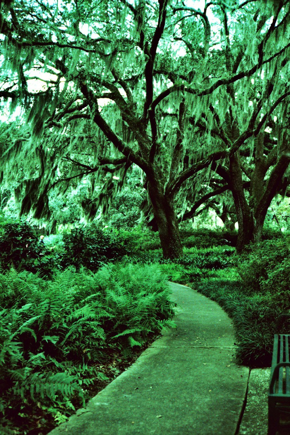 Oaks with Spanish Moss at Brookgreen Gardens on Flickr
