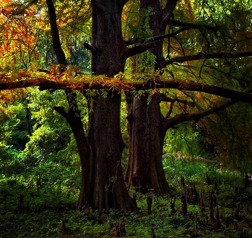 autumn trees japan forest japanese tokyo nikon shinjuku 日本 nippon 新宿御苑 東京 gyoen d100 品川 ajpscs shinjukugyoennationalgarden