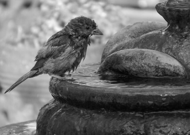Día de baño (2) (Fiuuuu)  (Digital)  (IMGP2648)