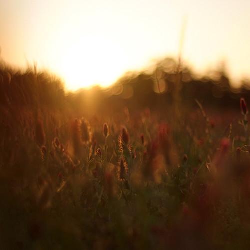 old sunset red field 50mm nikon texas fuji farm east salem f18 clover s5 getrdun
