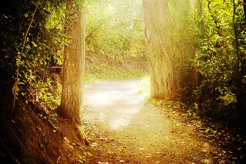 autumn light canada fall forest edmonton pentax path alberta da 1855mm smc alii f3556 k200d