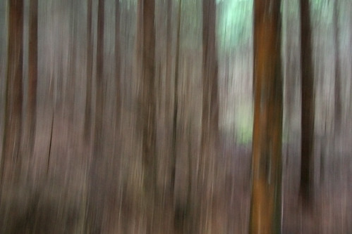 Forest near Freiberg | by unukorno