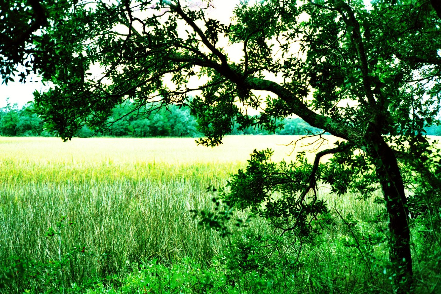 yet another tree with a rice field on Flickr